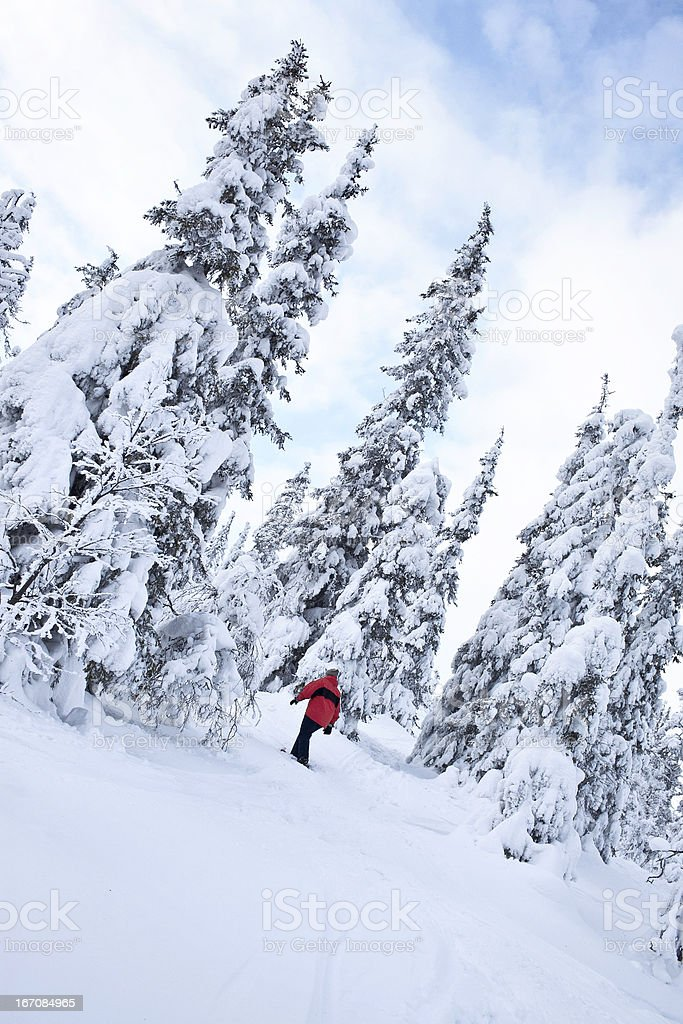 Lost in winter forest royalty-free stock photo