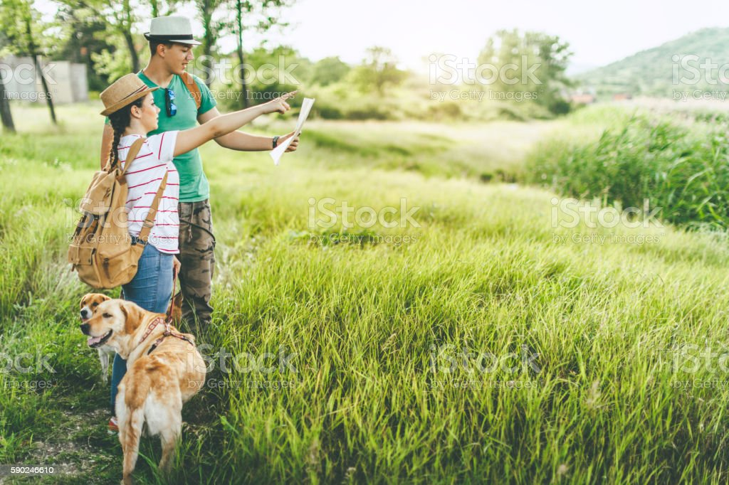 Lost in woods with dogs stock photo
