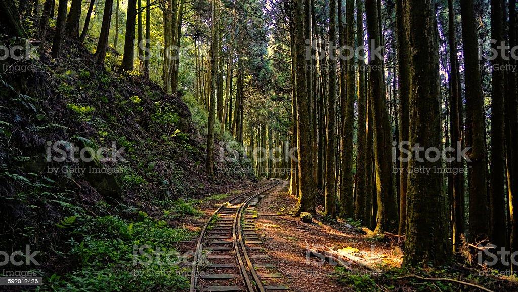 Lost Path stock photo
