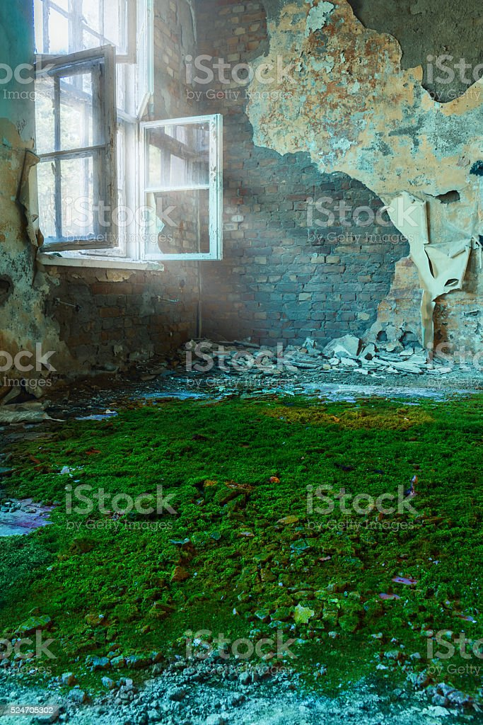 Lost Place Moos Light stock photo