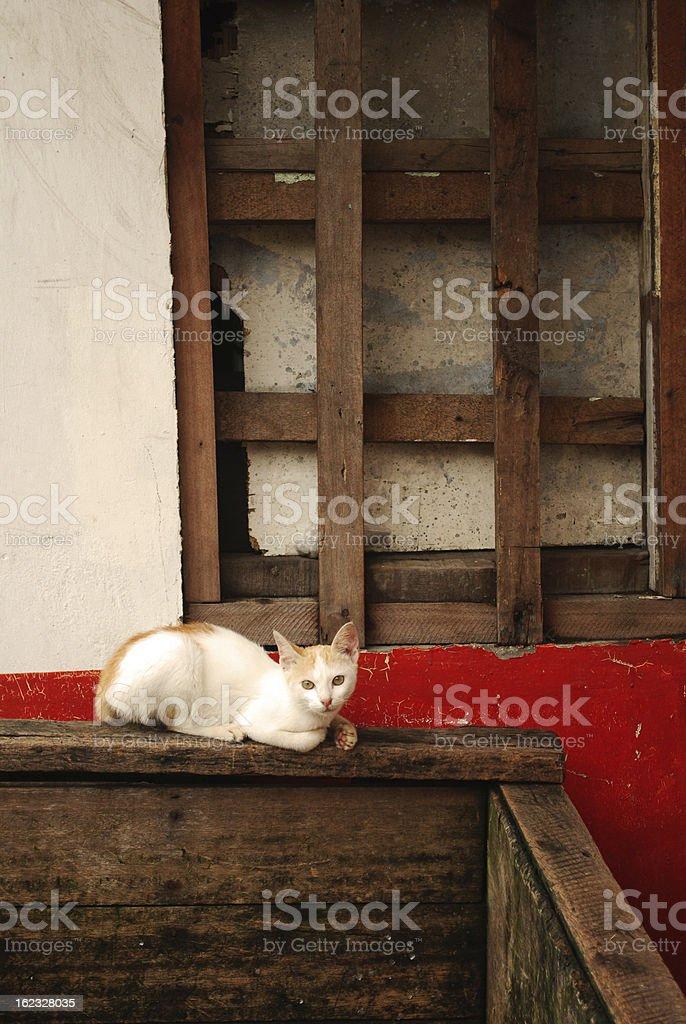 Lost Stray Cat royalty-free stock photo