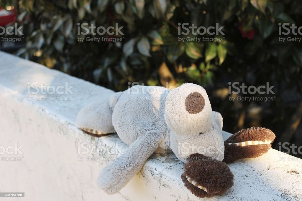 Lost Teddy left behind on wall stock photo