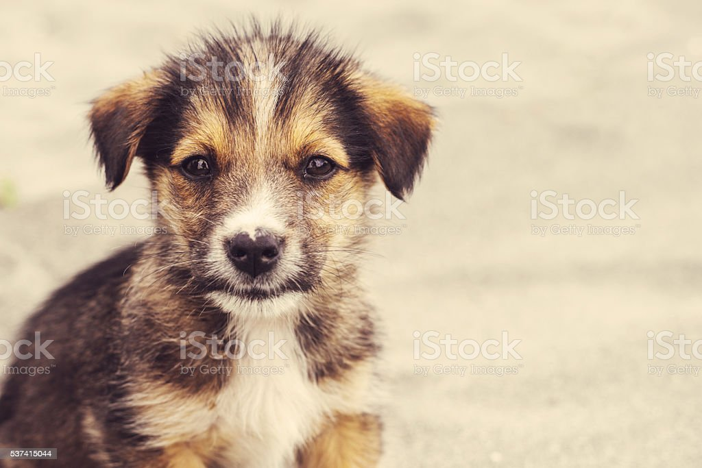 losted little dog stock photo