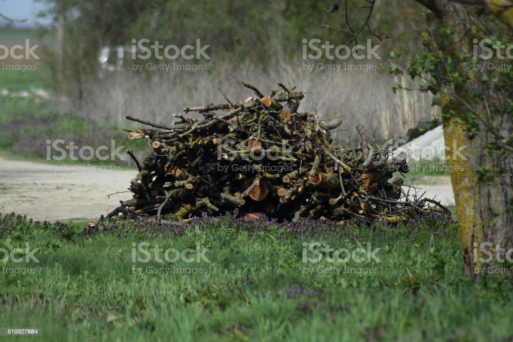 Lot of dry old firewood stock photo