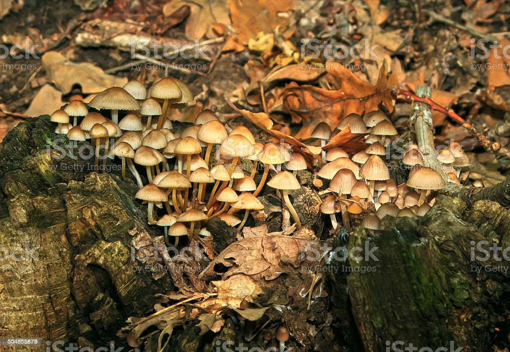 lot of mushrooms in the forest stock photo