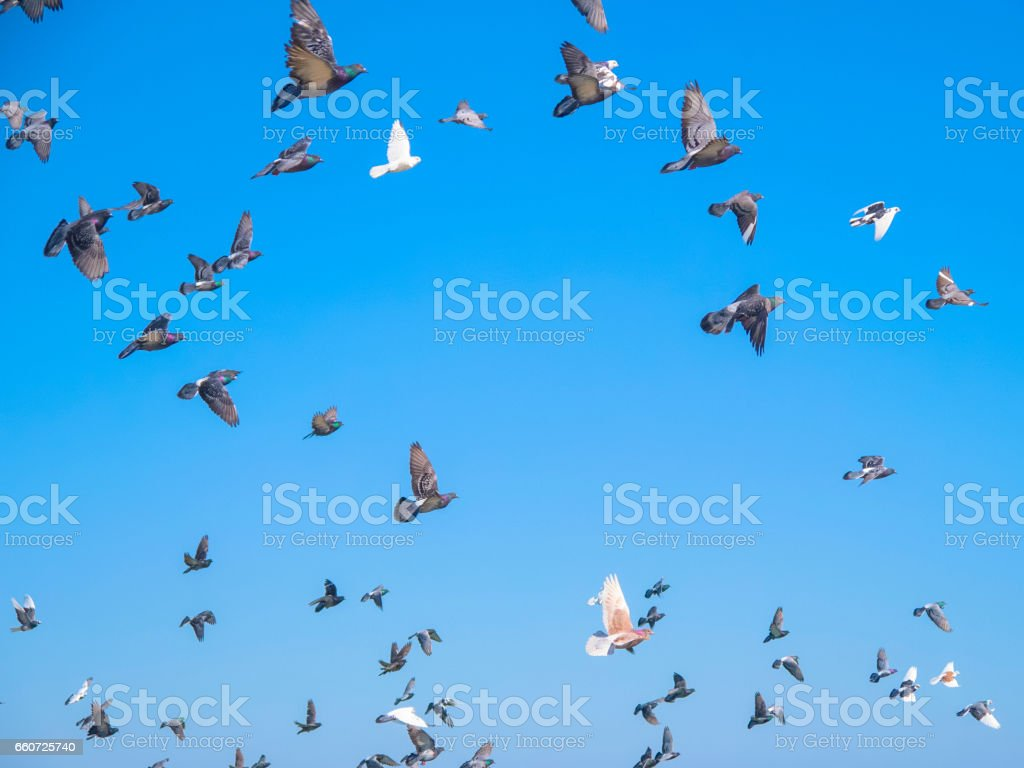 A lot of pigeons on fly against the blue sky stock photo
