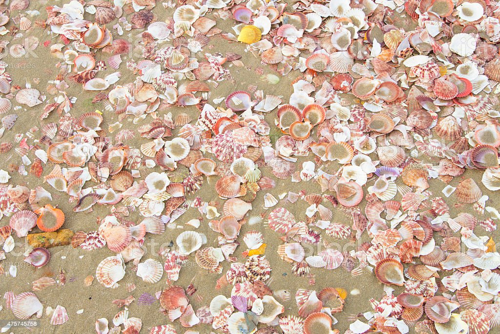 lot of shells on the beach at Muine Vietnam stock photo