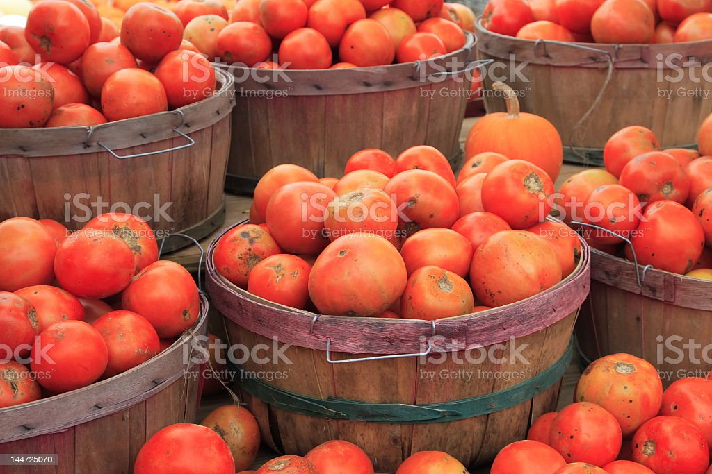 A lot of tomatoes in small barrels royalty-free stock photo