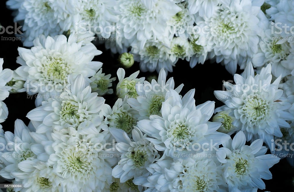 lot of white flowers stock photo