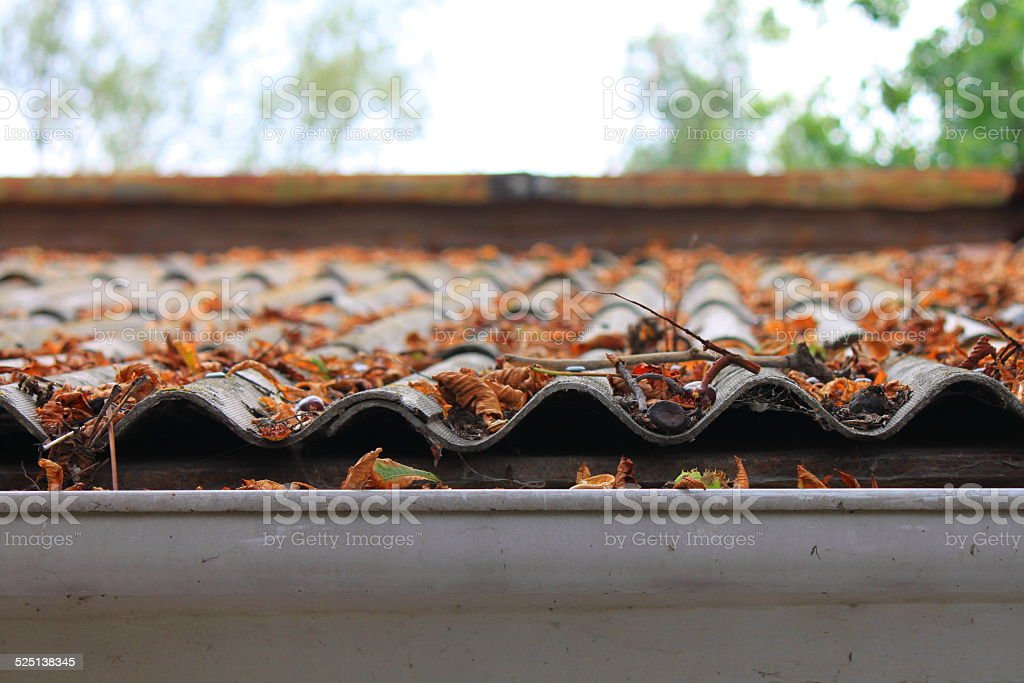 Lots of autumn leaves on a roof stock photo