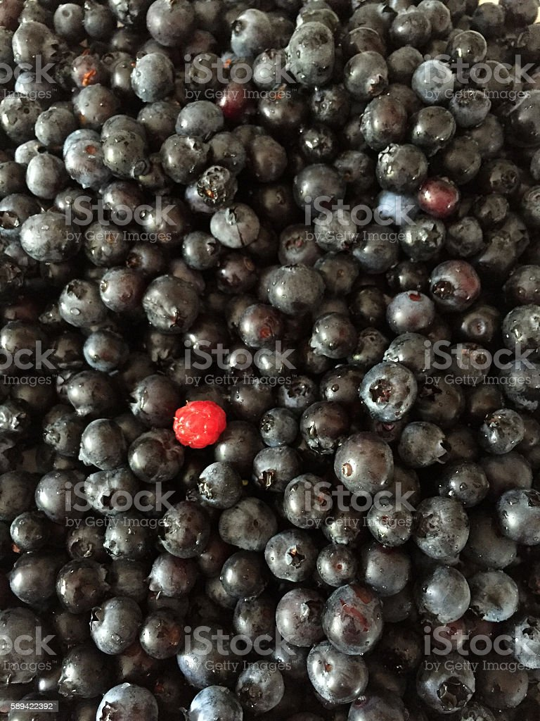 Lots of Blueberries and One Raspberry royalty-free stock photo