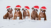Lots of cute dogs in the snow in Winter Hat