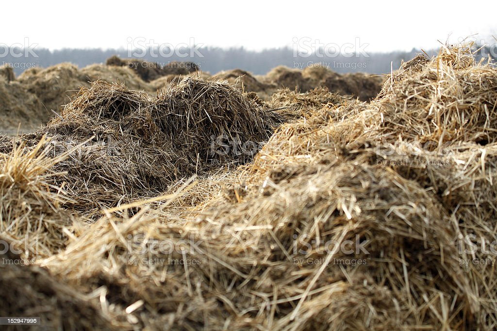 lots of dung piles stock photo