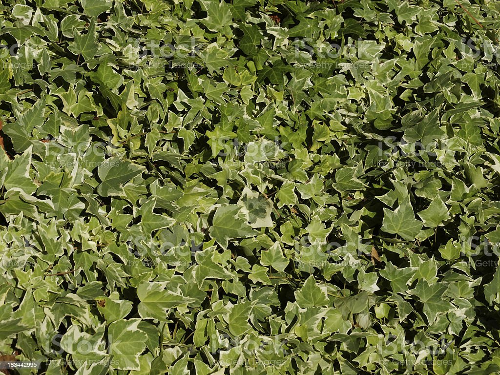 Lots of green leafs royalty-free stock photo