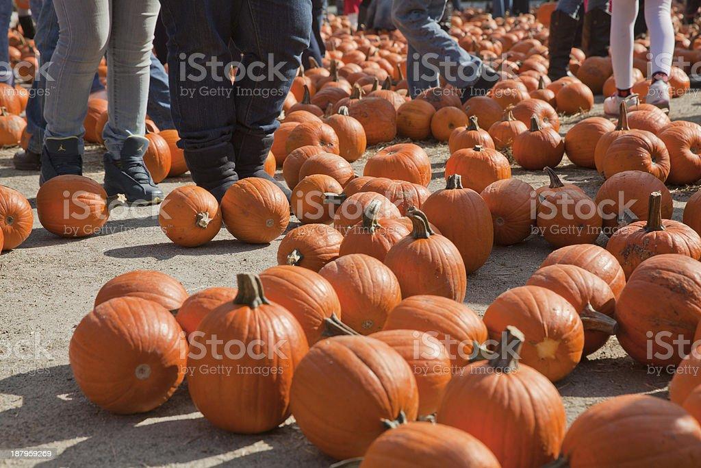 Lots of pumpkins royalty-free stock photo