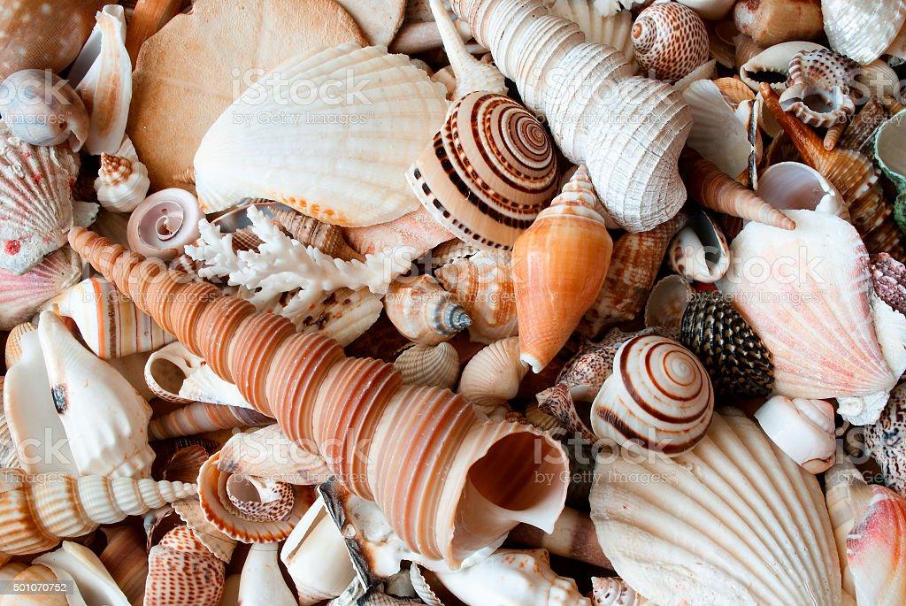 Lots of seashells. stock photo