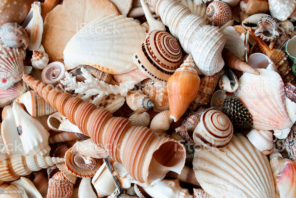 Lots of seashells. stock photo
