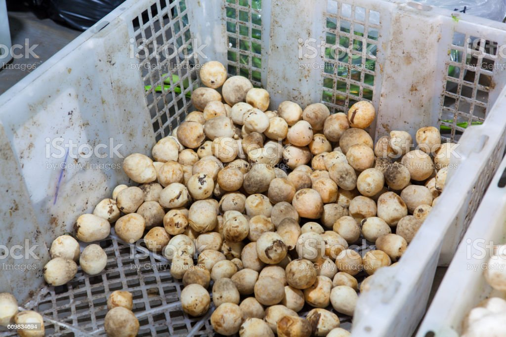 Lots of white small mushroom for sale stock photo