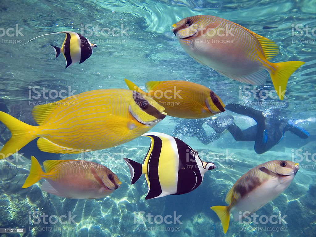 Lotsfishes stock photo