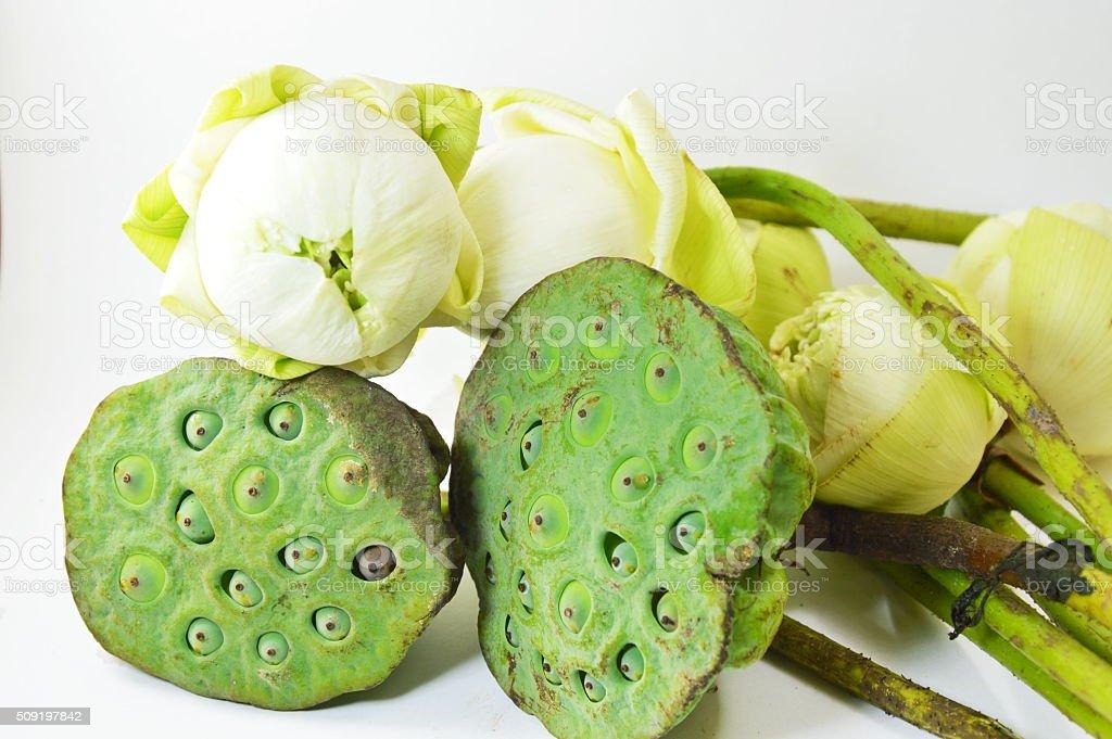 lotus and pod on white background stock photo