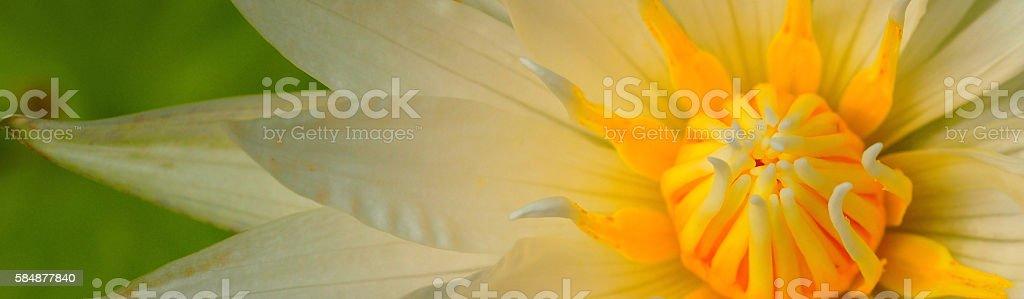 Lotus Banner stock photo