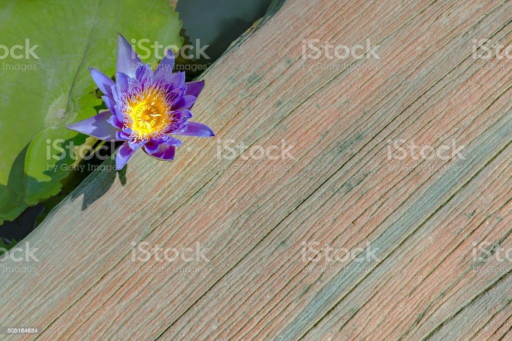 Lotus bloom in the way travel royalty-free stock photo