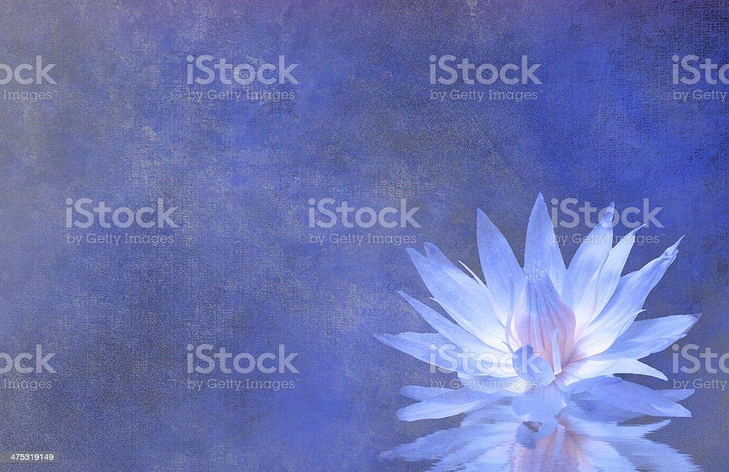 Lotus Blossom royalty-free stock photo
