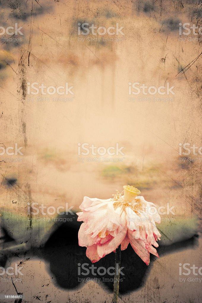 Lotus flower in grunge image retro background royalty-free stock photo