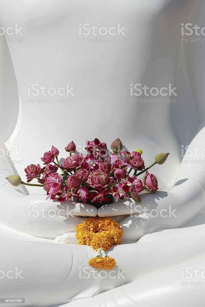 Lotus in Buddha hands stock photo