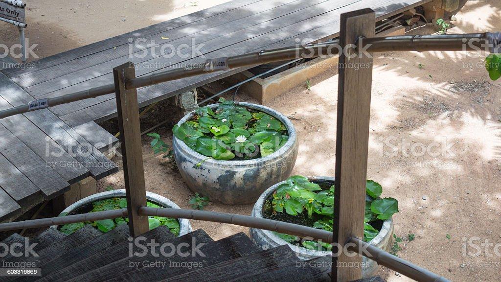 lotus in soil jar near wooden walk-path country for relax Стоковые фото Стоковая фотография