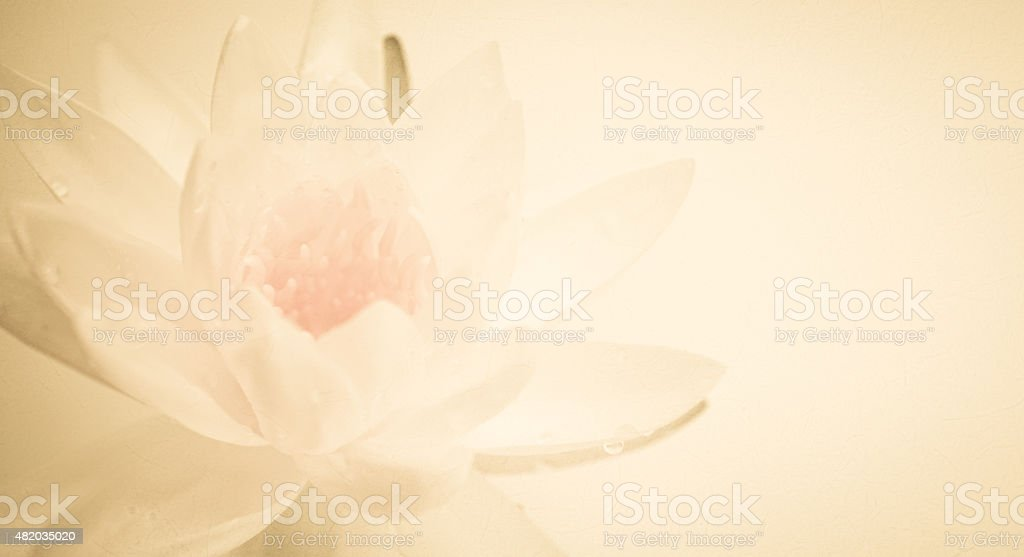 lotus in vintage color style on mulberry paper texture stock photo