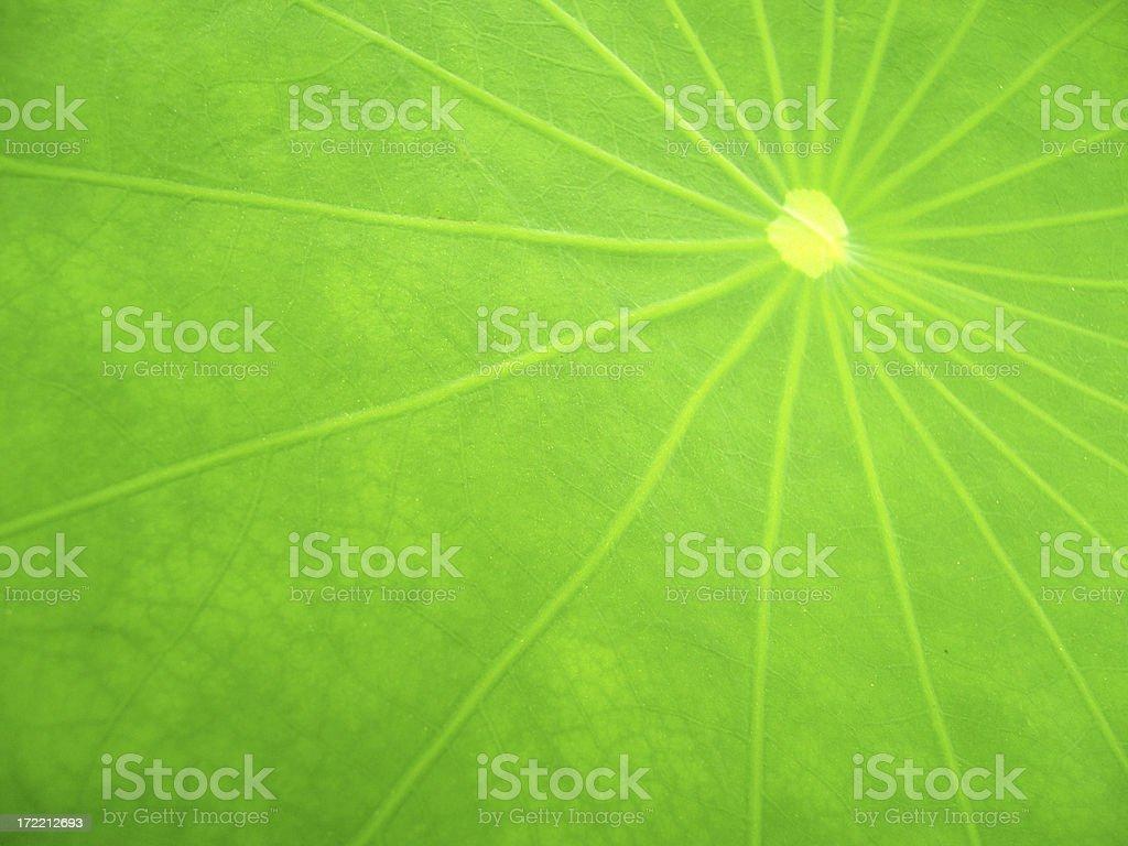 lotus leaf royalty-free stock photo