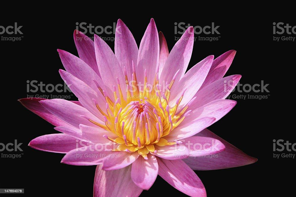 "lotus "" Lizenzfreies stock-foto"