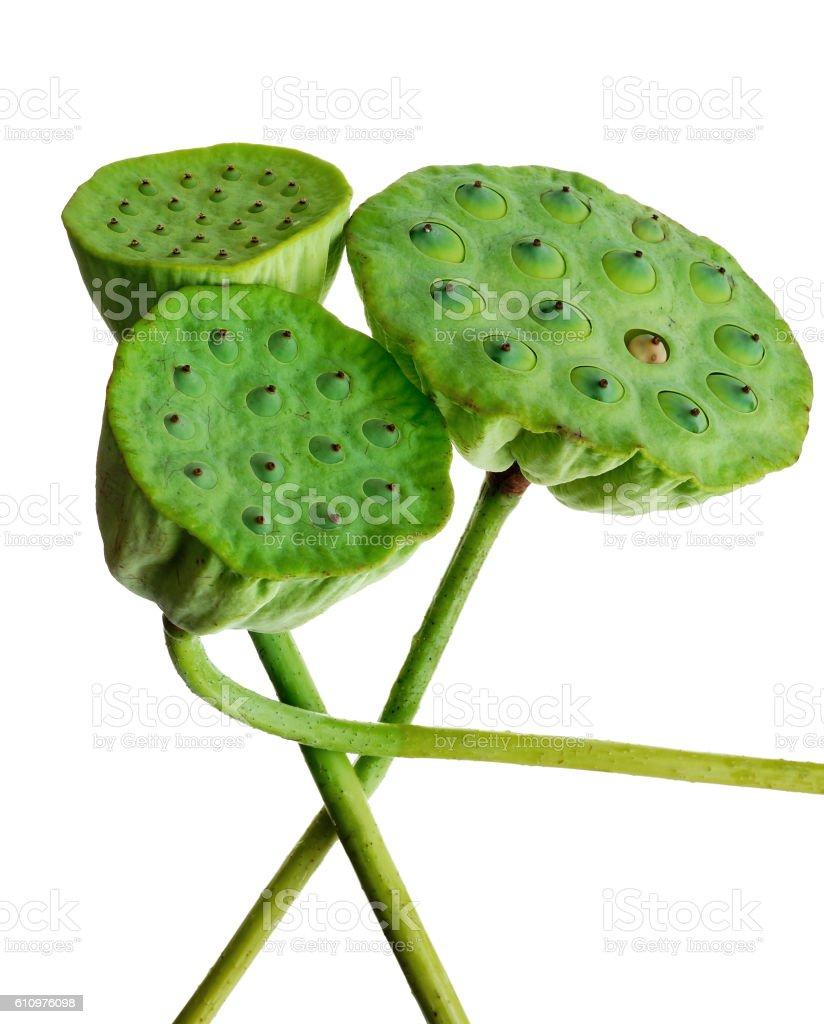 Lotus pods against white stock photo
