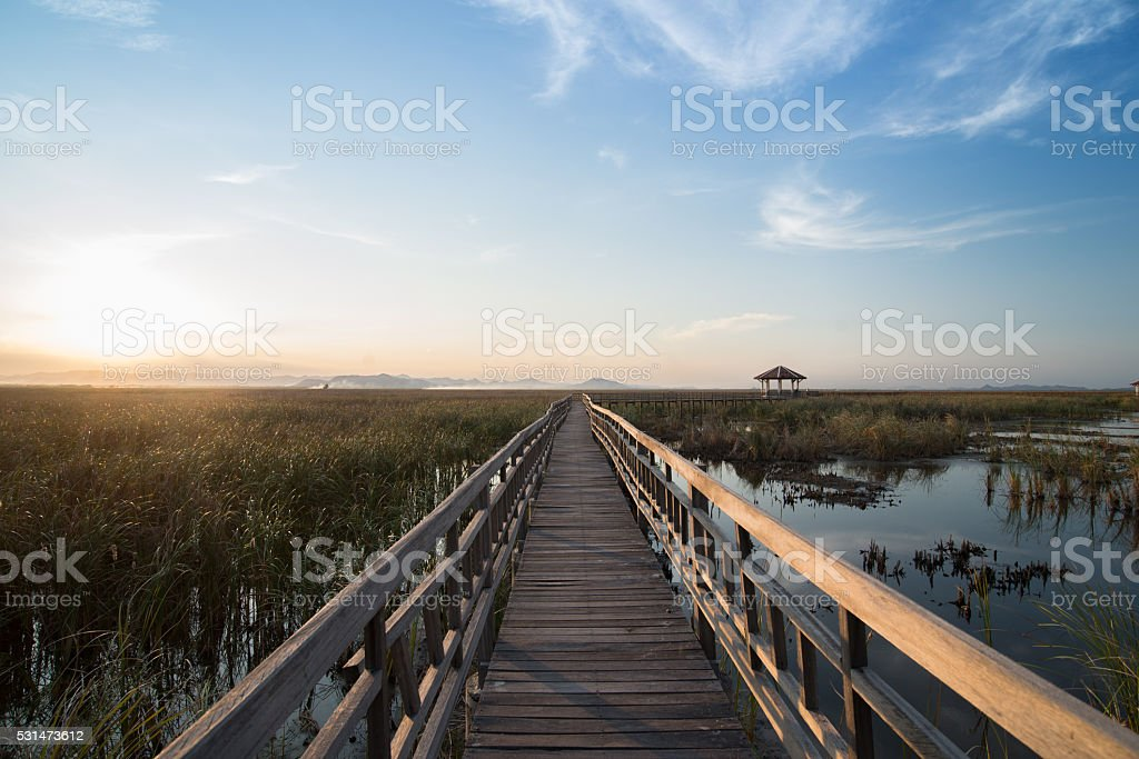 lotus pond nature park in Thailand stock photo