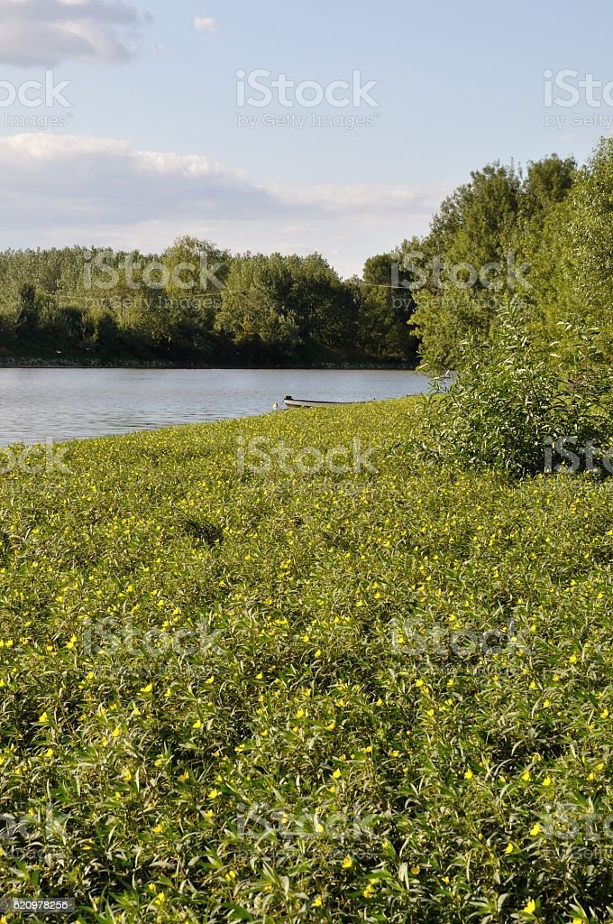 Louet river in Anjou stock photo