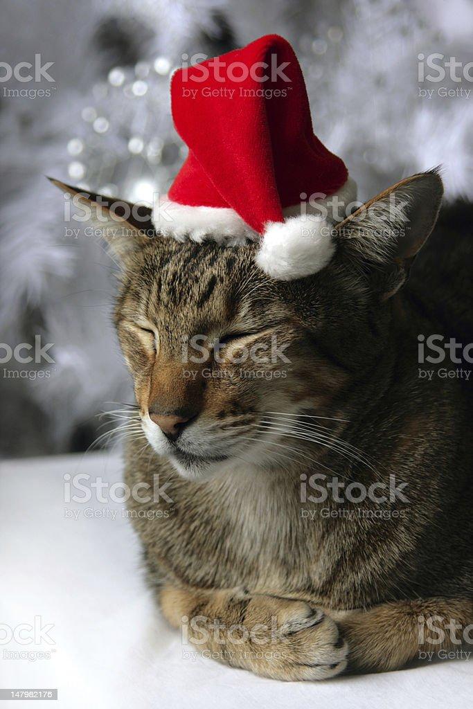 Louie de Noël Kitty photo libre de droits