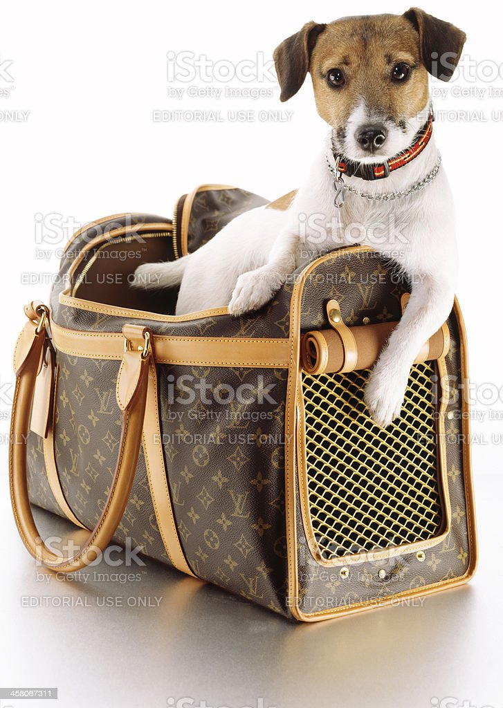 Louis Vuitton Pet Carrier with dog stock photo