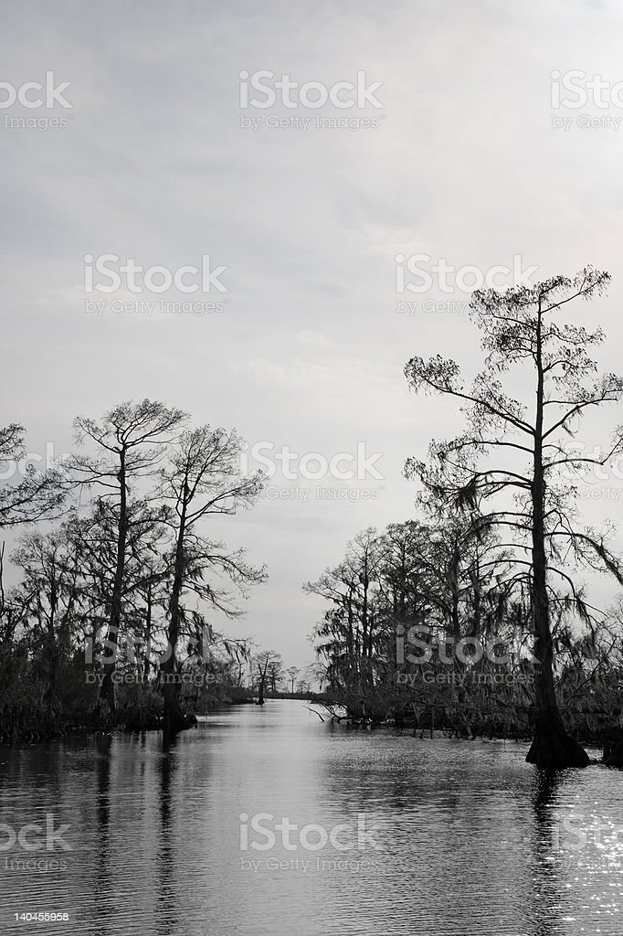 Louisiana Bayou royalty-free stock photo