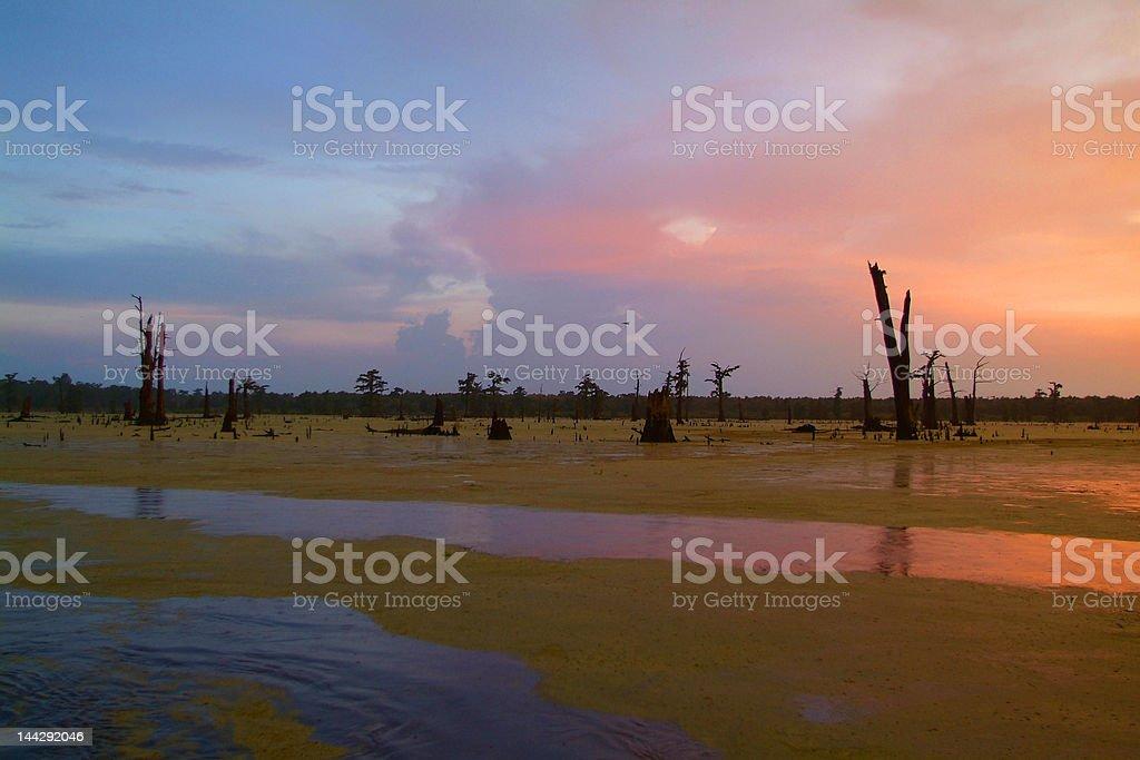 Louisiana Bayou royalty-free stock photo
