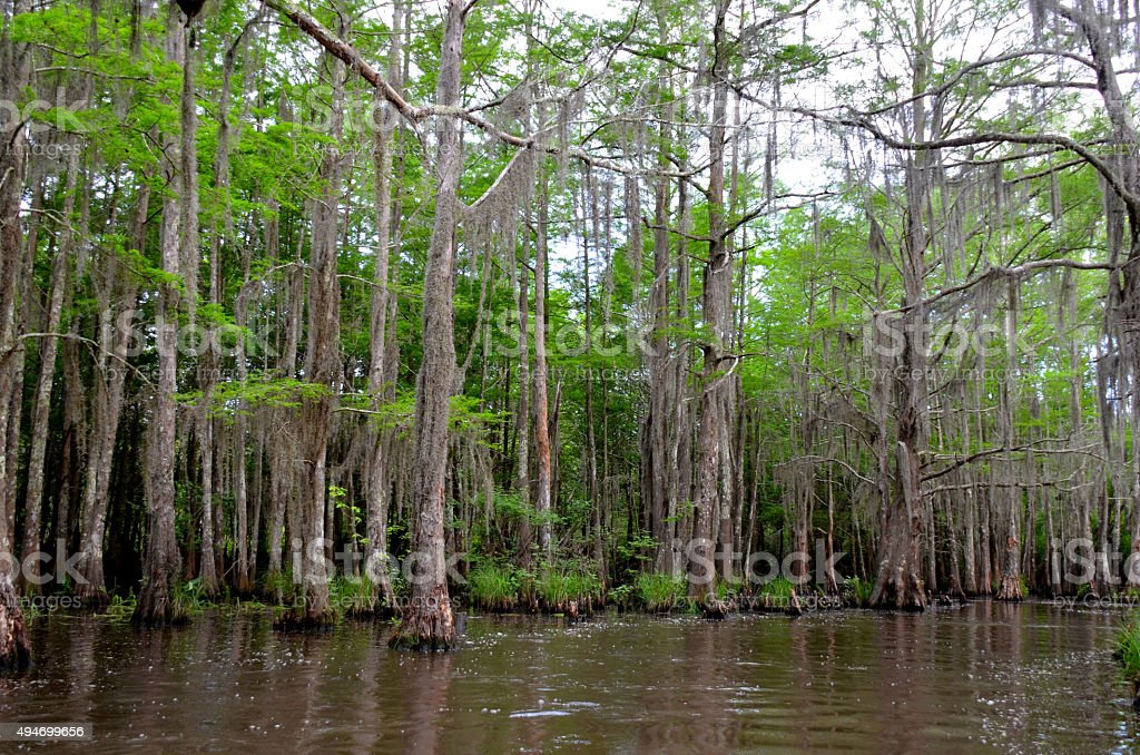 Louisiana Bayou, swamp, wetlands stock photo