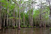 Louisiana Bayou, swamp, wetlands