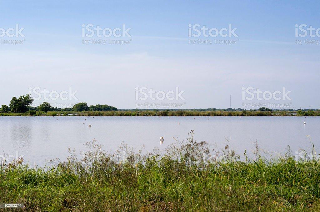 Louisiana Crawfish Farm royalty-free stock photo