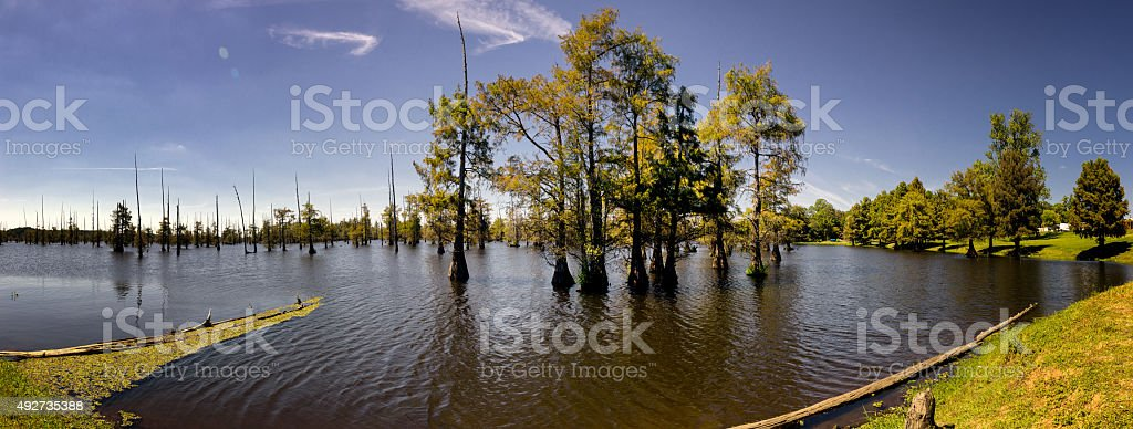Louisiana Cypress Tree Swamp Panoramic stock photo