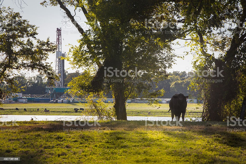 Louisiana Drilling Fracking Rig with a Cow stock photo