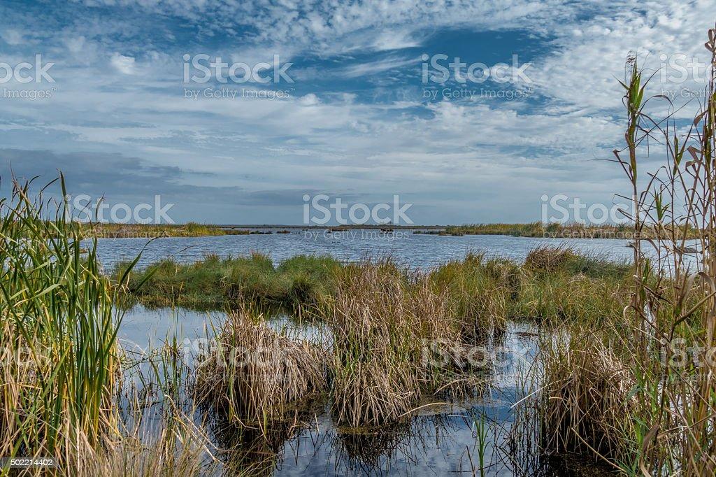 Louisiana marsh stock photo