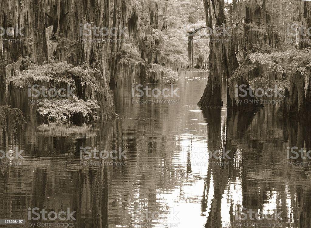 Louisiana Swamp in Monochrome royalty-free stock photo