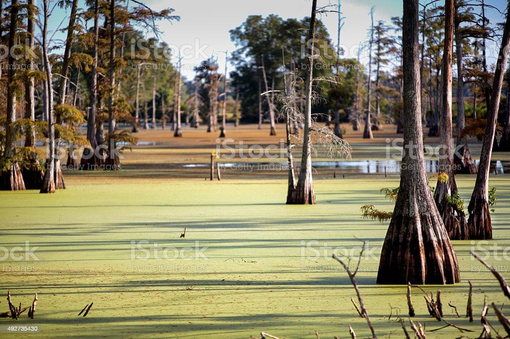 Louisiana Swamp With Cypress Trees stock photo