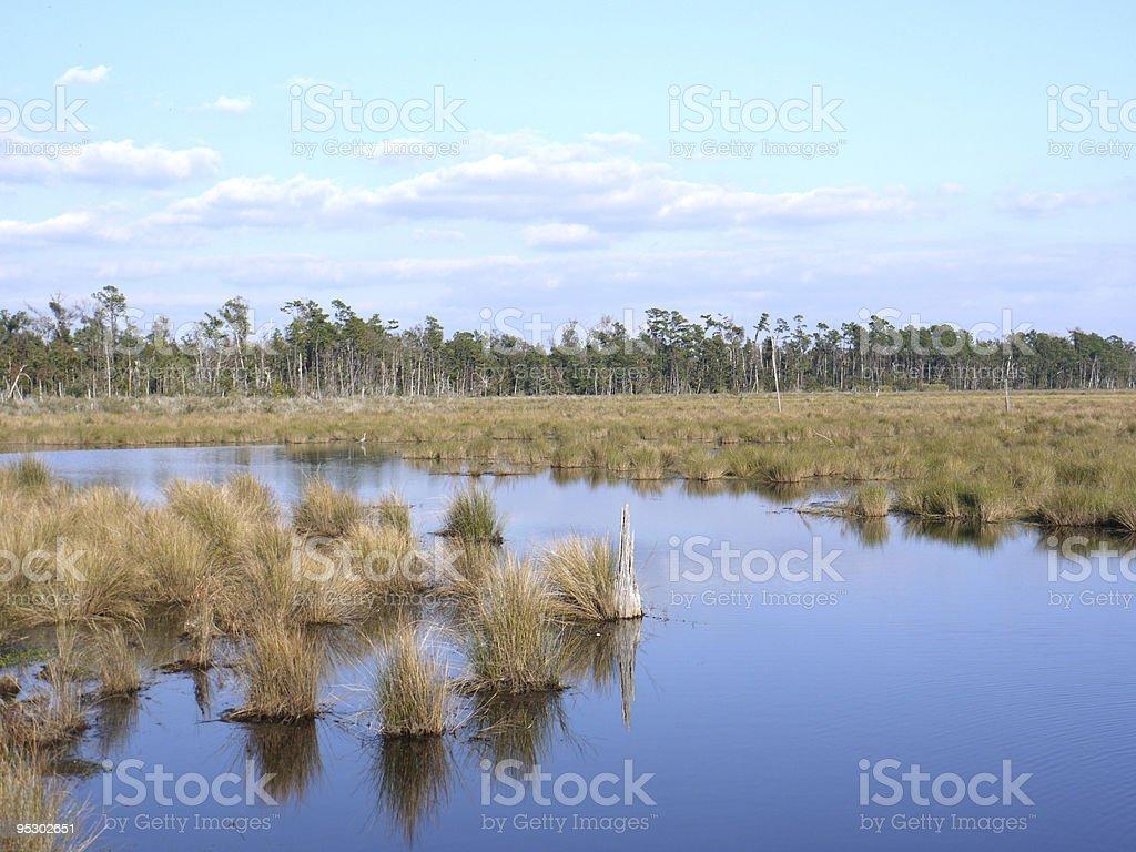Louisiana Wetlands stock photo