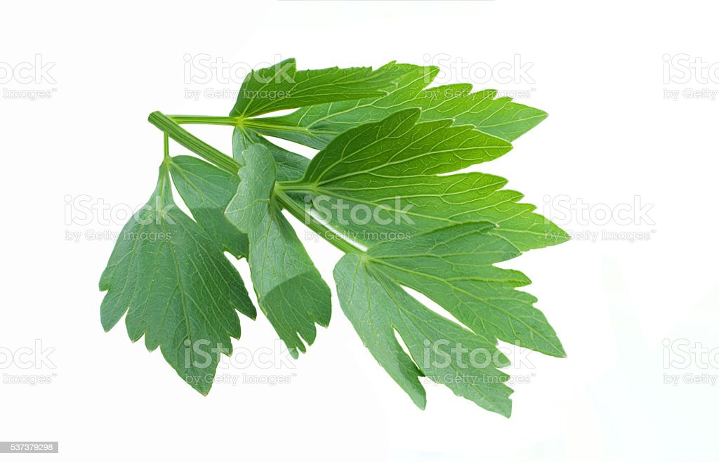 Lovage isolated stock photo